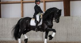 Paard & Lifestyle 2014